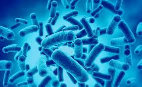 Probióticos y prebióticos. ¿Que son? ¿Como influyen en nuestra salud?