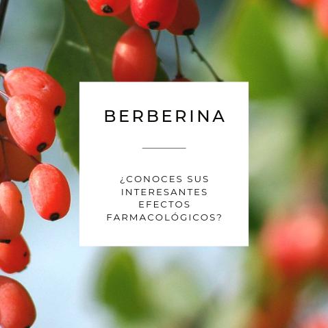 Berberina y sus interesantes efectos farmacológicos